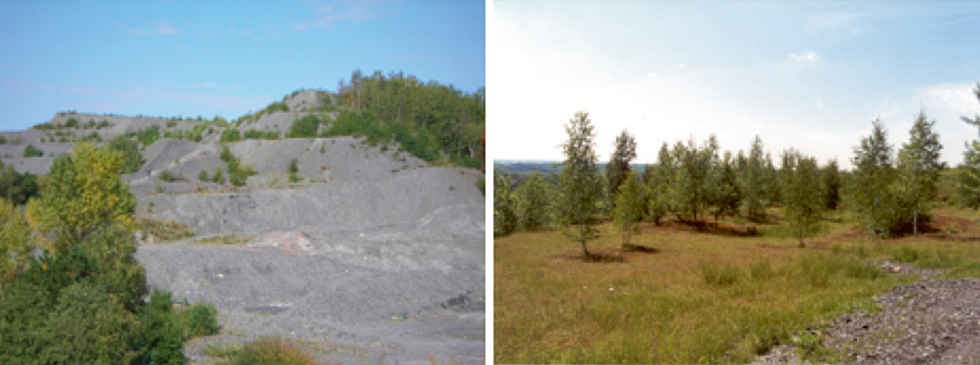 Fig. 4. Disused colliery spoil tip before and after recultivation. // Bild 4. Bergehalde des Steinkohlenbergbaus vor und nach der Rekultivierung. Photo/Foto: Karl Kleineberg